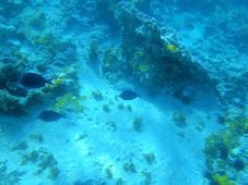 Under Water View